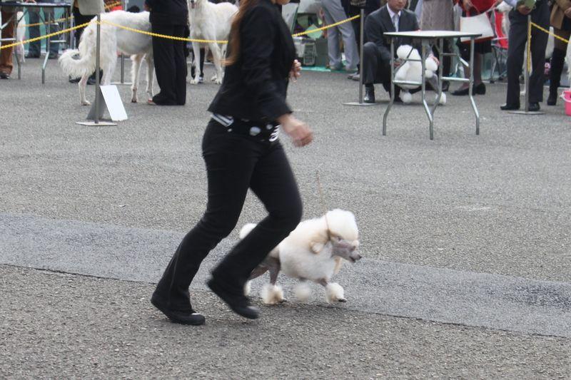 2011年10月30日東京東クラブ連合展@明治公園